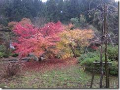 11月14日 竹田ドライブ 026