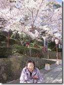 H28年4月5日外出行事 (桜) 023