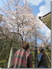 平成31年4月4日外出行事 桜 あわら 002